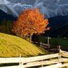 autumnsfolly userpic