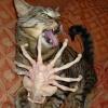 cuddlekittie userpic