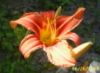 desertrosesmas userpic