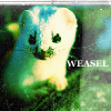 Misc-White Weasel