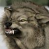 coyotesunrise userpic