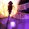 ecogryff: dragonfly