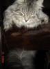 Sleepy Rocky