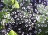 web_rain_univer