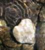 water and stone heart