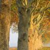 woodninja userpic