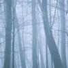 autumn // morning fog