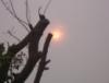 Bush Fire Sky