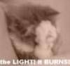 Trust Me! O_O: kitty light!