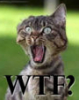 lt260: WTF Cat