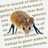 (spaced) mice-spiders
