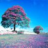 Feliz: Violet field