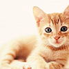 brilliantomega: Orange kitty