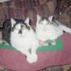 Hopita: Tino & Jacob