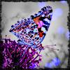 aquariess userpic