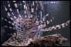 [User Picture Icon]