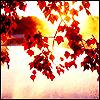 autumnallights