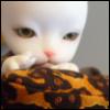 hedelmalepakko userpic
