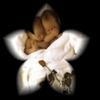 angels2love [userpic]