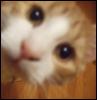 kitten_academy userpic