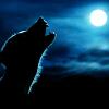 kittie8571: hp_wolf by ressie noldo