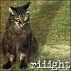 mrs_conclusion: cat