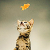 Sandy: kitty leaf by mo0nlight_shadow