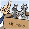 cat flip off kittens