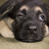 Это надо знать! ИНТЕРЕСНЫЕ факты о собаках 13832641