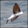 flyvefisk userpic