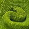 a Me: green snake