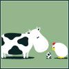 Chicken Cow