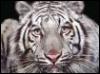 dara_tigra userpic