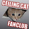 Madam Mina: Cat Macro - Ceiling Cat Fanclub