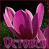 colchicum, october