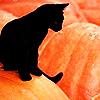 Pumpkin Kitteh