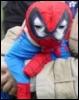 SpiderDawg