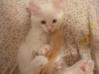 uchi as a kitten