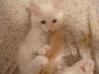 uchi as a kitten