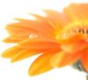 eternityfan userpic