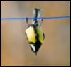lentokiivi userpic