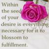 Quote-desire rose