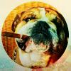 (dog) cigar