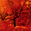 Film Photography, Infrared Photography