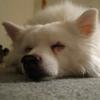 dogdreams userpic