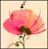 Маков цвет