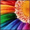 Colored Daisy