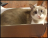 Logan in a Box