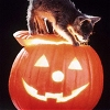 Elle Blessingway: Holiday: Halloween Kitten