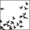 blackbirdeyes userpic